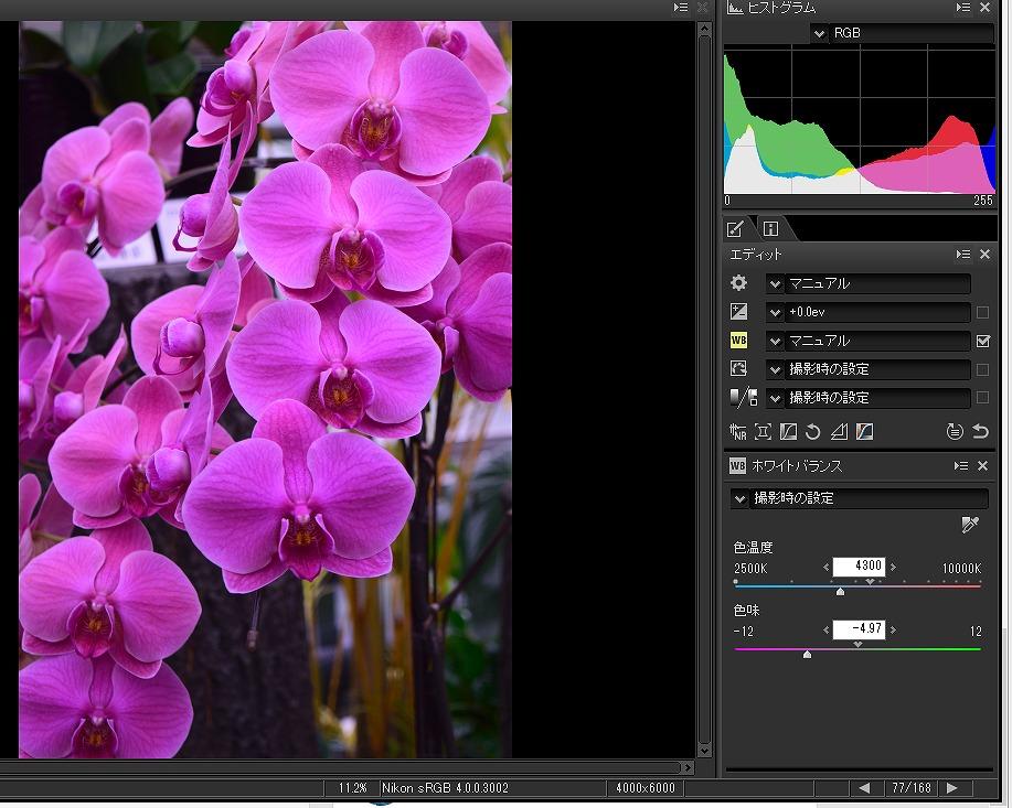 ニコン capture NX-D 画像 蘭の花