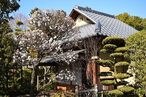 花田苑 日本家屋