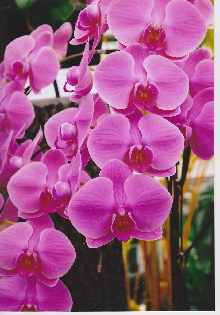 カメラのキタムラ プリントです。蘭の花です。