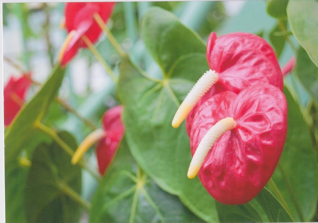 格安インクで写真プリント 熱帯の花