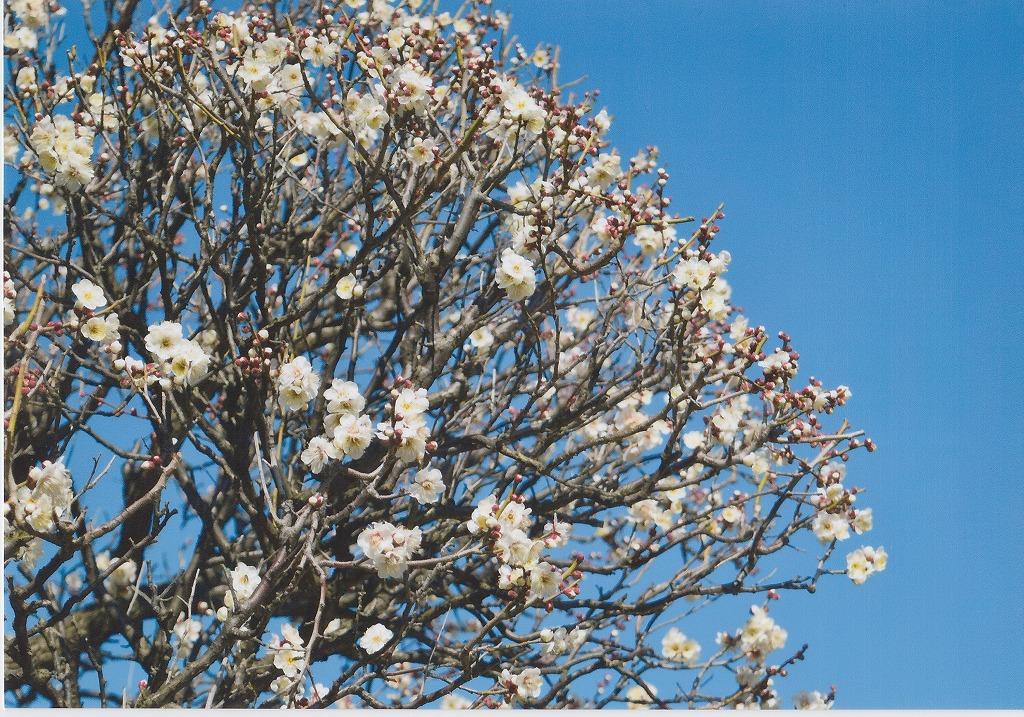 格安インクで梅の花を写真プリント