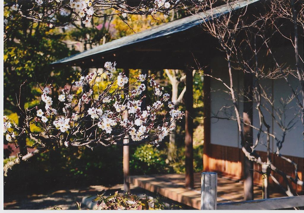 カメラのキタムラでプリント 梅と民家