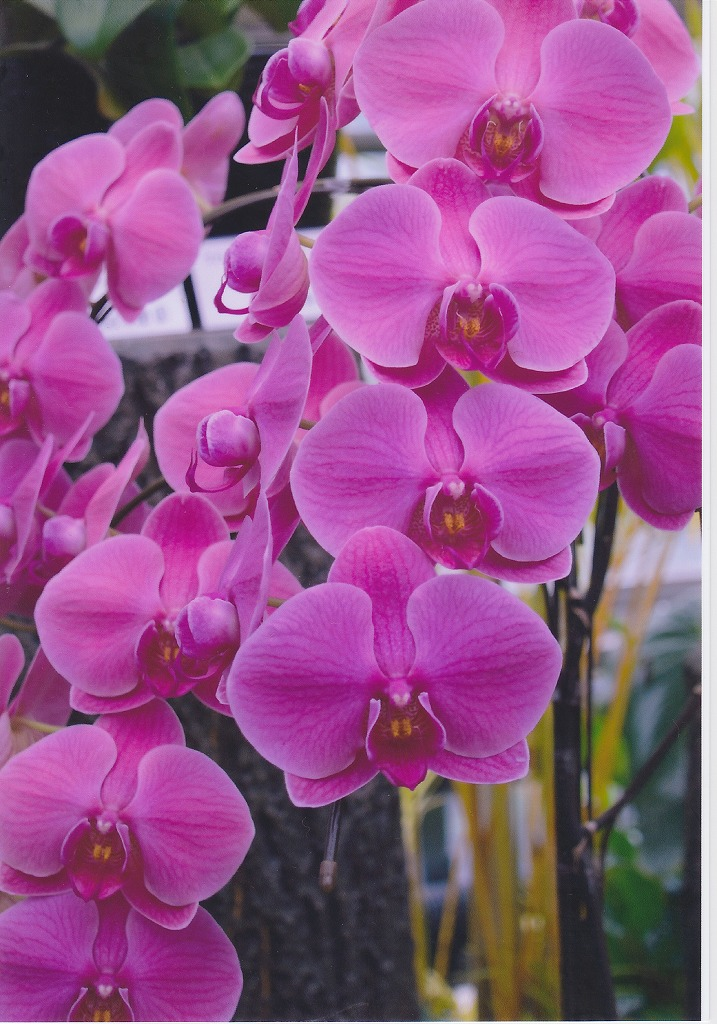 RAW現像してプリントした蘭の花