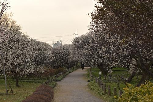 梅林公園 越谷市
