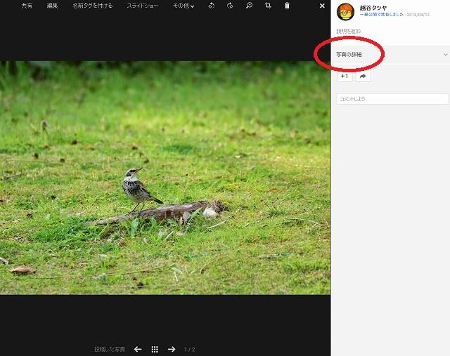 google+ コシタツ写真
