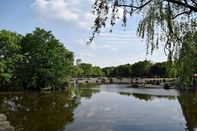 庄和総合公園 お池