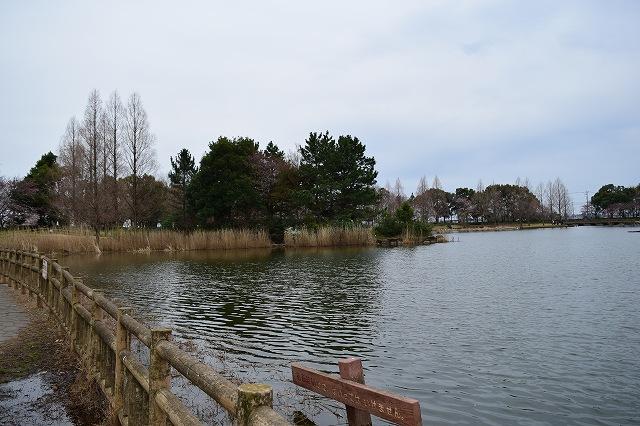 松伏総合公園 お池