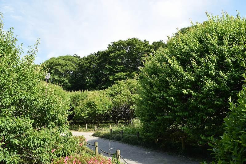 越谷梅林公園 夏
