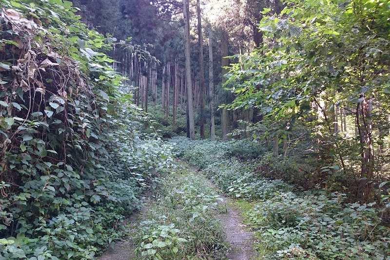 日本水水源への林道