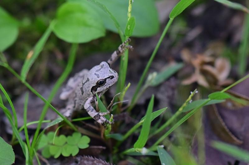 マクロレンズで撮影したカエルと羽虫